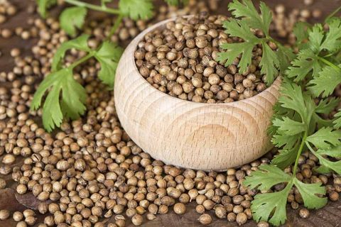Coriander Seeds and Leaves in Pile